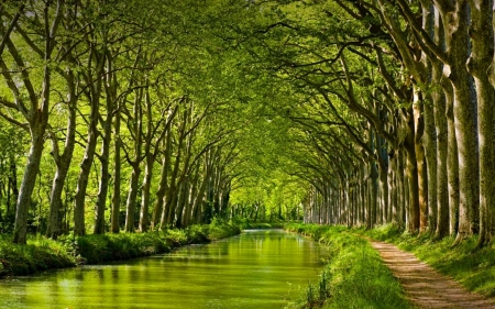 Canal du Midi - France, Trees, Forest, Canal