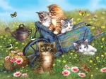 Kittensin a Meadow