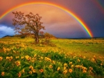 Rainbow in Springtime