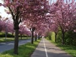 Cherry Tree Alley
