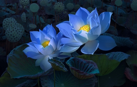 Blue lotus flowers nature background wallpapers on desktop nexus blue lotus mightylinksfo