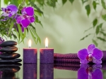 Purple Orchid Spa