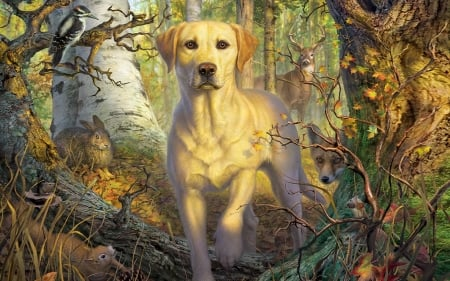 Dog In Wildlife - forest, Dog, woods, wildlife, nature, trees, animals, outdoors