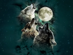 Howling by Moonlight