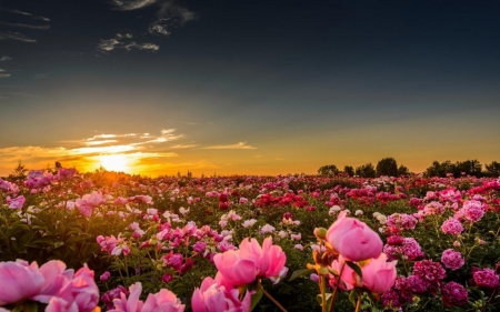 Valley flowers in sunset sunsets nature background wallpapers on valley flowers in sunset mightylinksfo