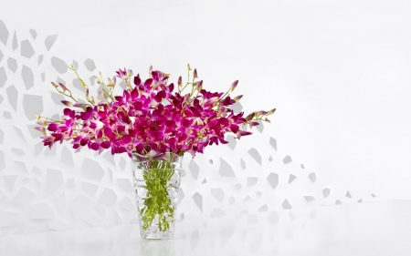 Orchids - orchid, flower, vase, white, pink