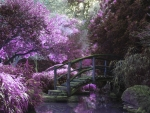 Mystic Purple Forest