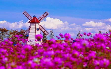 Spring flower field fields nature background wallpapers on spring flower field windmill flowers nature spring clouds pink mightylinksfo