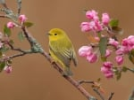Bird on Flowering Tree
