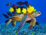 Turtle & Yellow Fish in the Sea