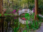 Bridge & Path in Flowery Forest