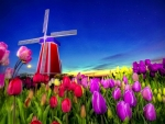 Dutch Tulips and Windmill
