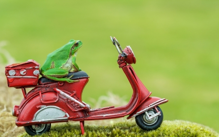 :) - frog, red, broasca, green, amphibian, funny, motorcycle