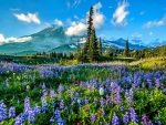 Mount Rainier NP