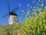 Windmill in Rapefield