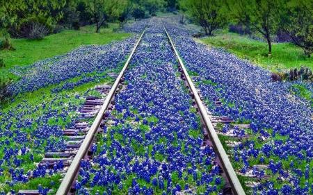 Endless Tracks - Flowers & Nature Background Wallpapers on Desktop Nexus (Image 2376667)