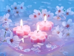 Candles And Cherry Flowers