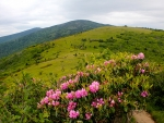 Rhododendron Mountains