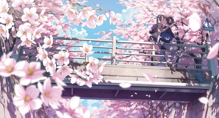 Kiss - sakura, manga, kantoku, spring, kiss, cherry blossom, anime, flower, pink, couple