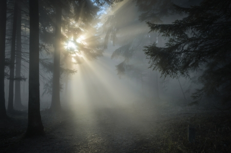 Mist in a Forest - forest, stream, quality, twilight, trees, mist, fog, spooky, nature, light
