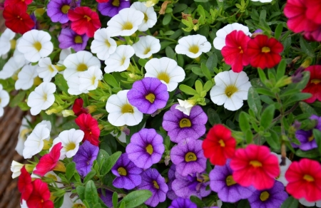 Bright and Cheerful - colorful, summer, flowers, beauty, bright, nature, spring