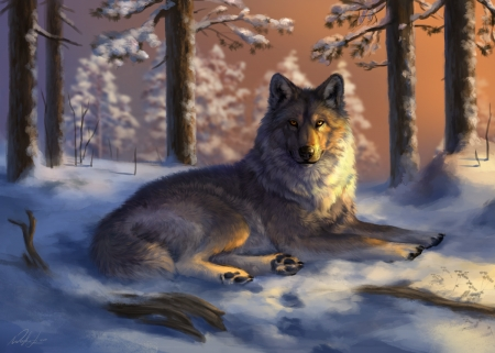 Gray Wolf Lying on the Snow - wolf, animal, snow, winter, trees