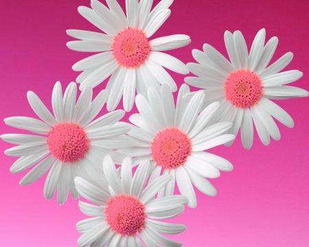 Flowers pink flowers nature background wallpapers on desktop flowers pink mightylinksfo