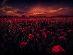 Poppy Field Under a Cloudy Sky,
