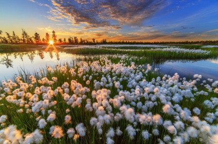 Rising Sun on the Morning Sky - pond, sun, rays, banks, flowers, nature, clouds, sky