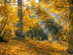 Yellow Leaves Autumn Forest