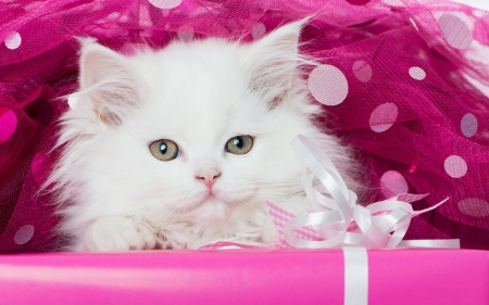Cute White Kitten - look, mustache, kitty, eyes, cat, kitten, muzzle, animal