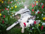 Dog Lies in the Middle of Spring Flowers