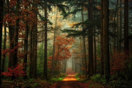 Path in the Mixed Forest, Germany - trees, autumn, nature, mist, path, forest