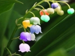 Rainbow Lily Of The Valley