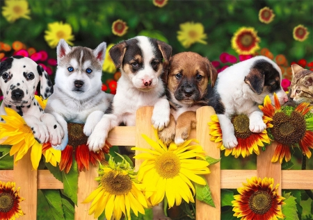 The gang's all here - fence, beautiful, adorable, gang, sweet, cute, puppies, sunflowers, summer, flowers, garden, friends, dogs
