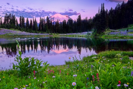 Mount Rainier NP - lake, reflections, tranquil, wildflowers, meadow, forest, mountain, Moun Rainier, grass, national park, serenity, sunset, beautiful