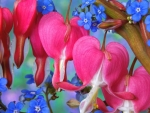 Bleeding Heart and Forget Me Nots