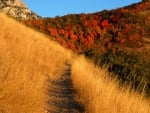 Path Through the Amber Grass