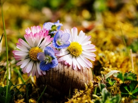 Early Spring Flowers Nature Background Wallpapers On Desktop
