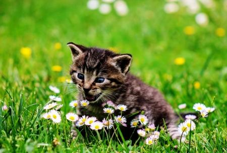 Kitty Cat Cats Animals Background Wallpapers On Desktop Nexus