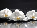 White orchids with stones