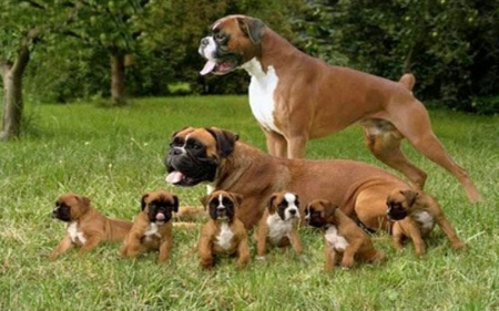 We Are Family - Cute, Family, Dogs, Puppies, Animals