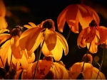 Orange Flower Lights