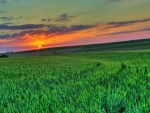 Sunset Over the Green Field