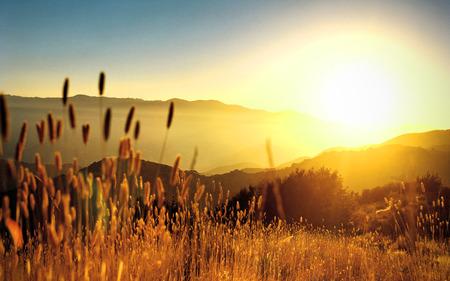 Beautiful Autumn - beauty, autumn, fields, nature, landscape, sun, sunny