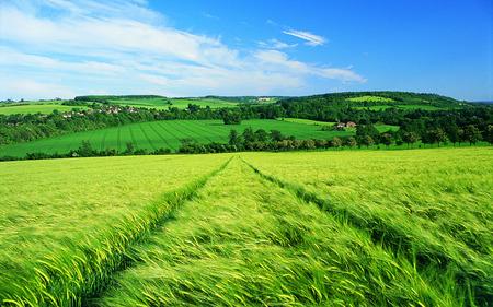 Green Fields - grass, fields, skies, blue, spring, green, nature, landscape