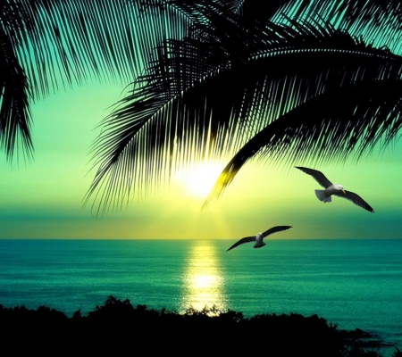 Tropical Beach - beach, birds, nature, palm, sunset, reflection, trees, tropical