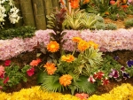 Beautiful Flowerbed