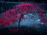 Red Tree In The Darkness