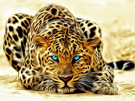 leopard with blue eyes dogs animals background wallpapers on